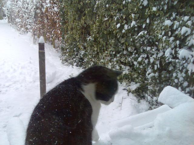 kat sneeuw